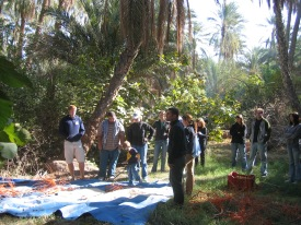 Students watching dates being collected in Tozeur oasis