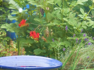 Hummingbird in Corvallis Oregon